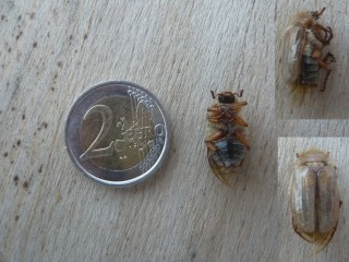 http://www.zebix.be/images/201106_insect_TN.jpg